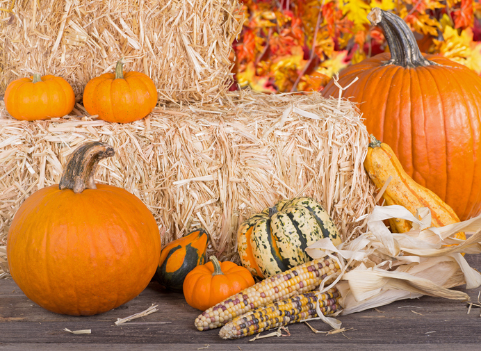 Autumn arrangement of pumpkins, gourds, squash and corn with bales of hay