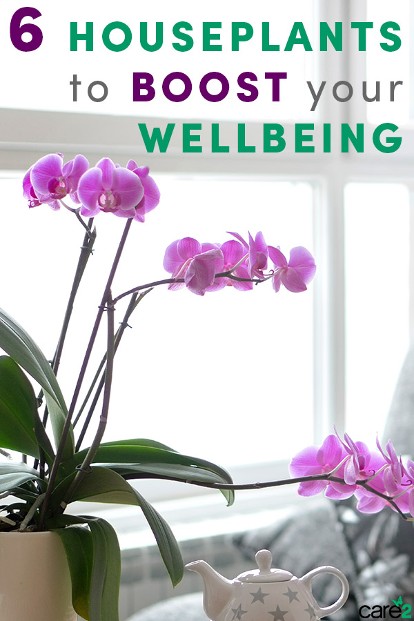 These 6 Houseplants Will Boost Your Wellbeing