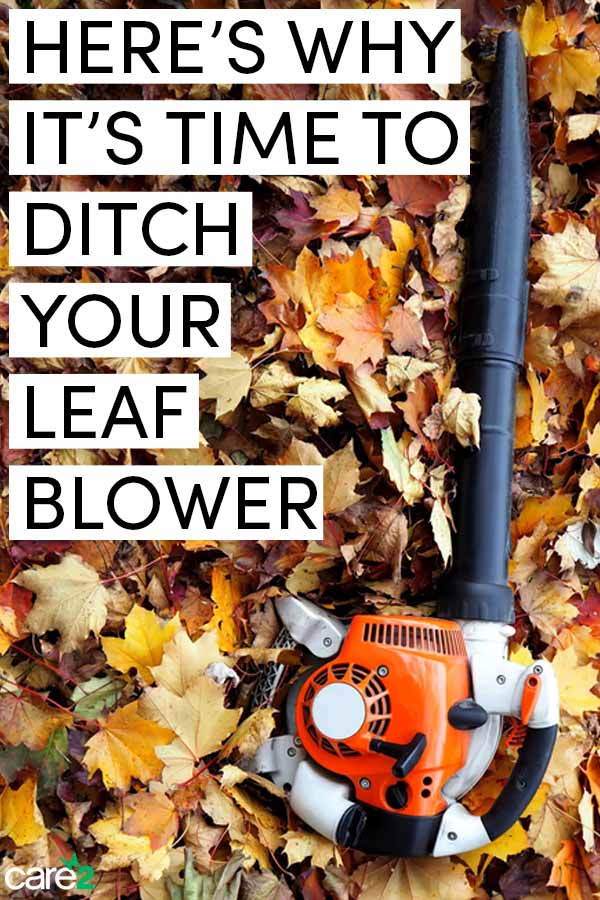 Why You Should Ditch Your Leaf Blower this Fall