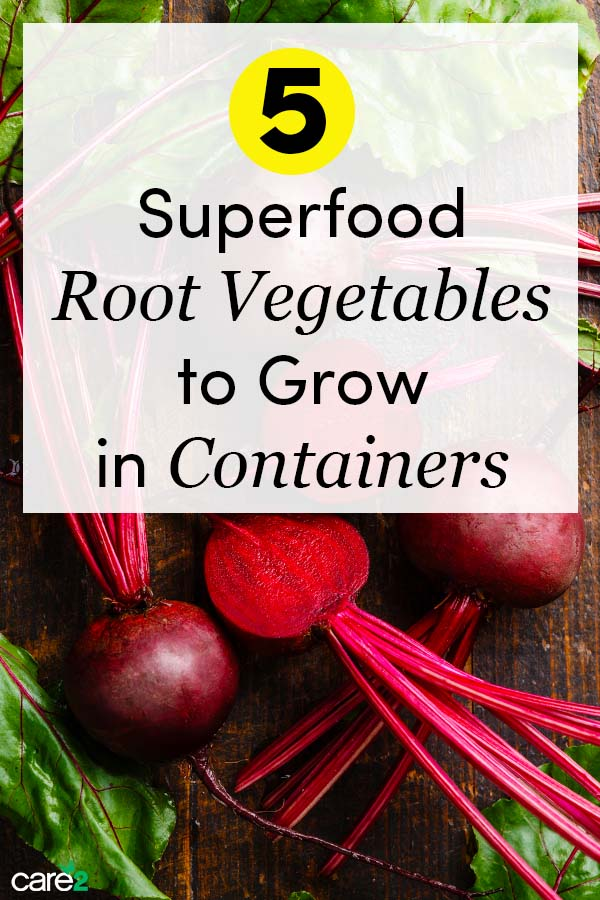 5 Superfood Root Vegetables to Grow in Containers
