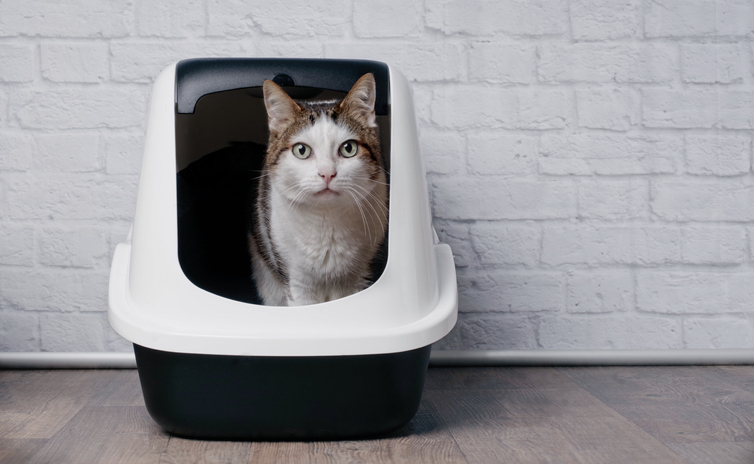 tabby cat sitting in a litter box