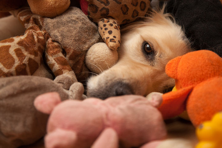 A dog is buried in dog toys.