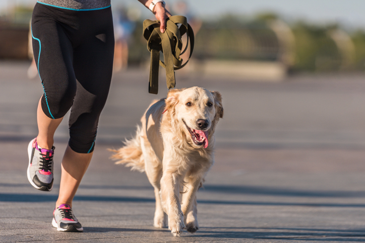 A person jogs with their dog.