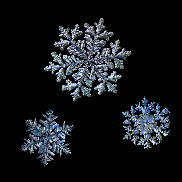 three snowflakes isolated on black background
