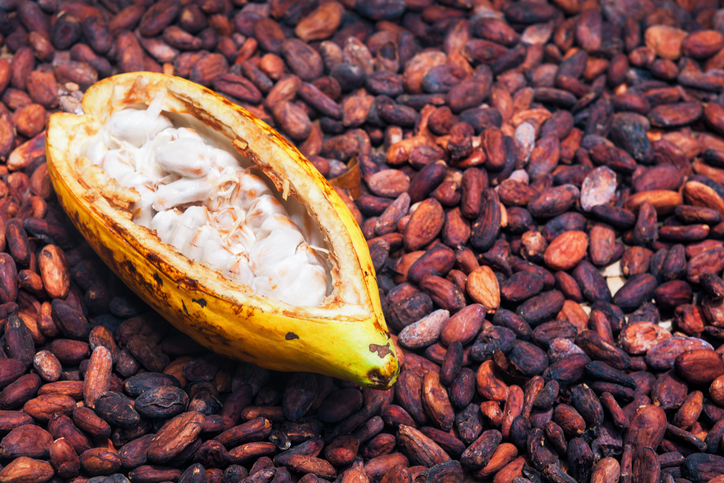 Opened ripe cocoa pod on drying raw beans background