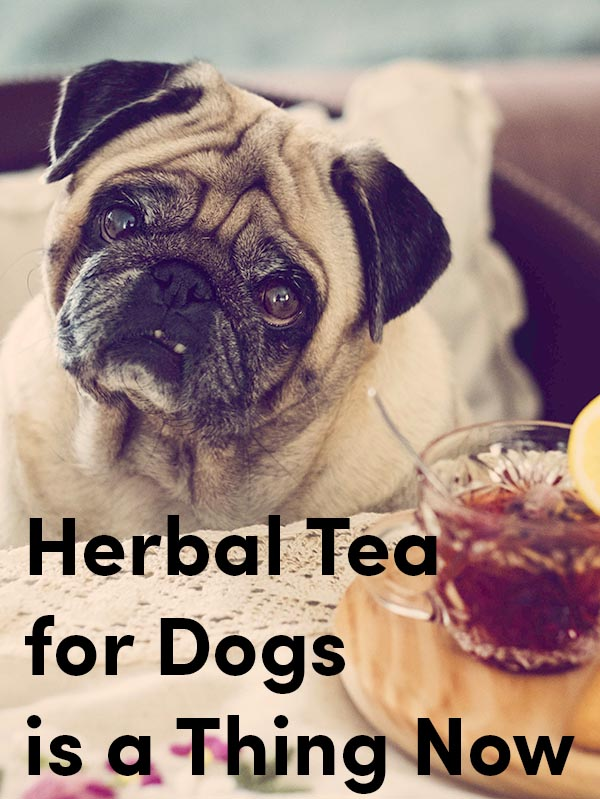 Wait, There's Herbal Tea for Dogs?