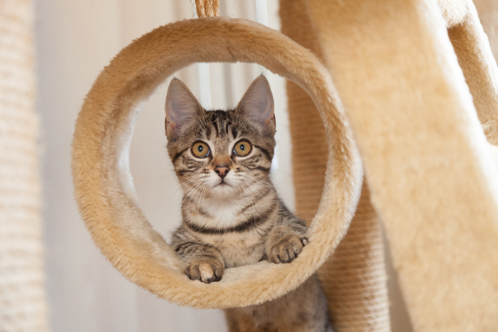 cat playing on a cat tree