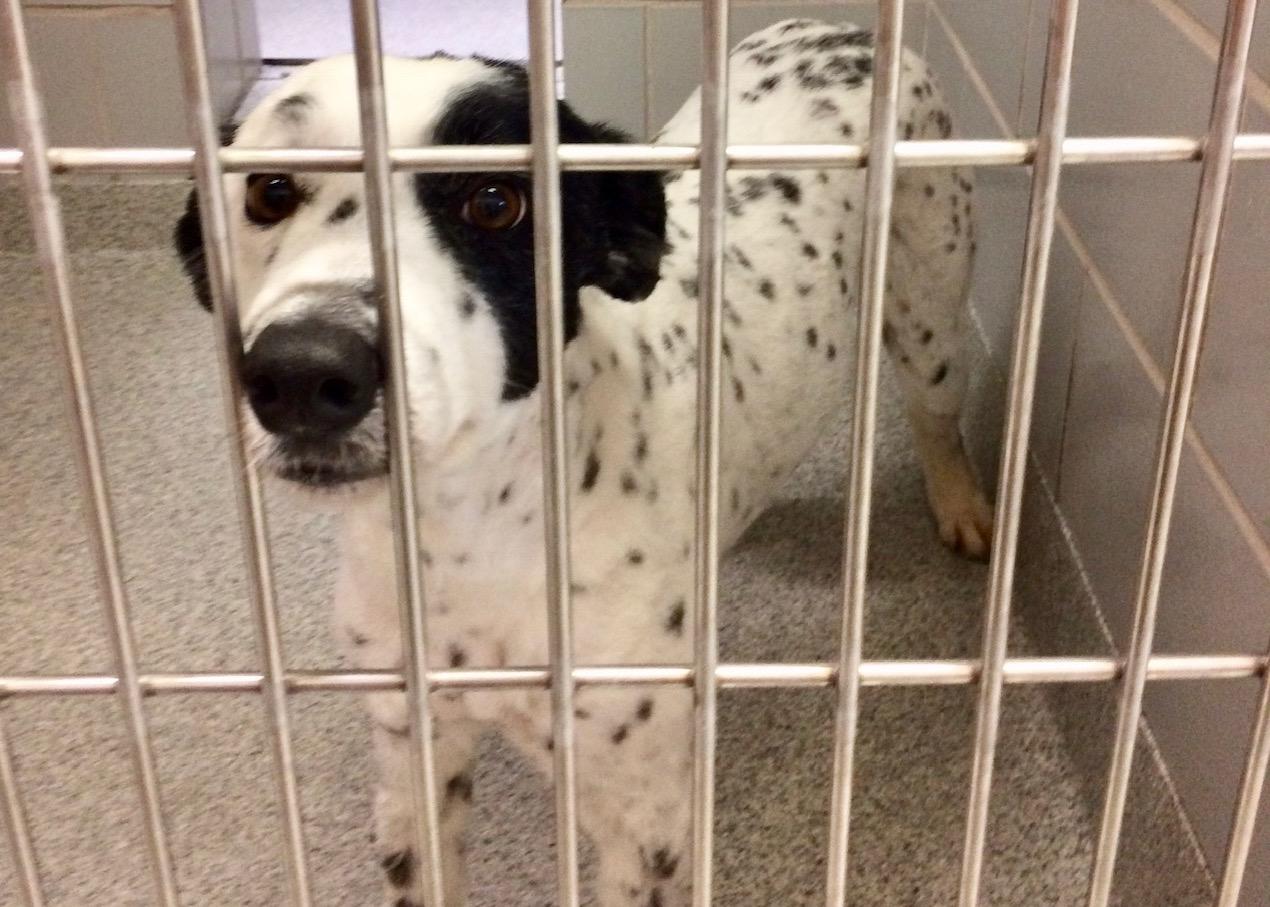 dog in animal shelter