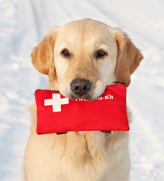 dog holding pet first aid kit in its mouth