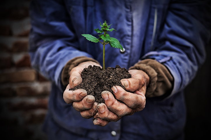 the hands of a farmer holding a tiny plant in dirt
