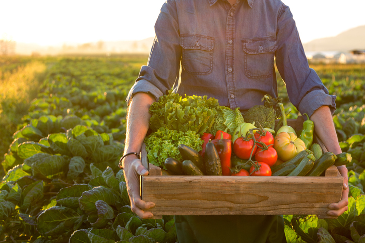 Farmer carrying crate with vegetables