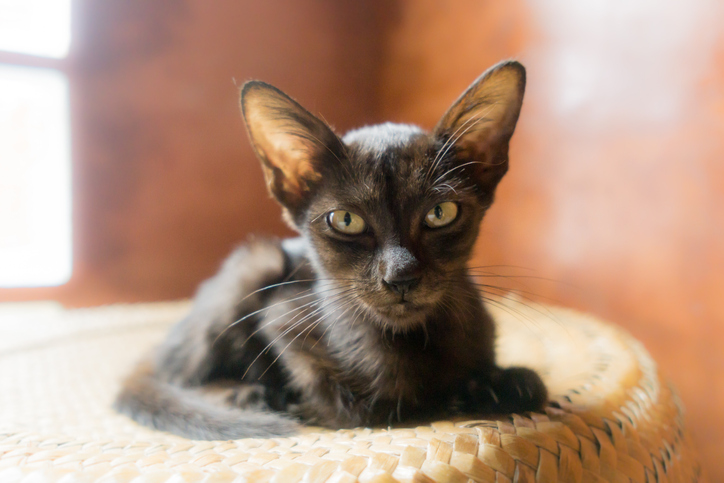 Cute Kitten curled up on basket