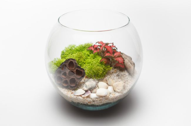Terrarium with lotus pod
