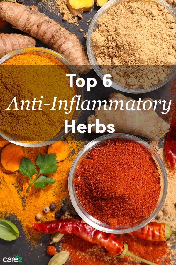 Top 6 Anti-Inflammatory Herbs