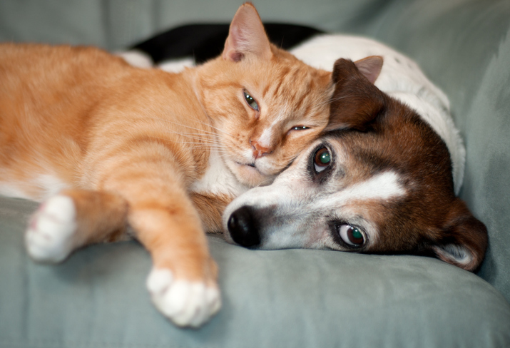 cat and dog relaxed lying on couch together