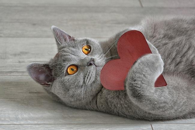valentine's day for animals