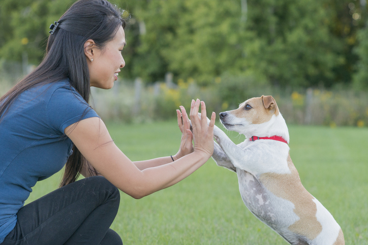 A dog gives a woman two high-fives.