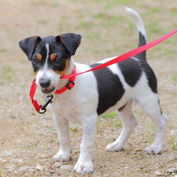 dog biting leash on a dog walk
