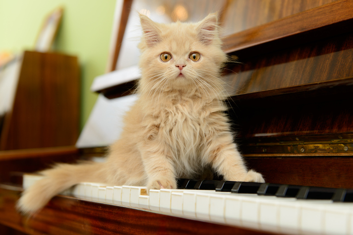 a kitten sitting on a piano