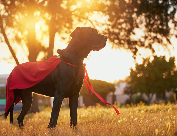 a dog standing in a cape like a superhero