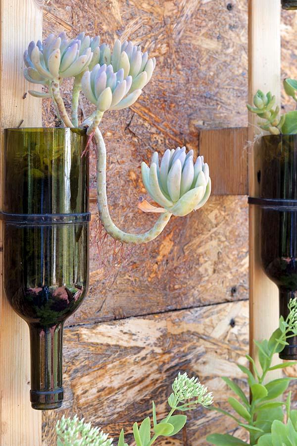 Wine bottles reused as flower pot
