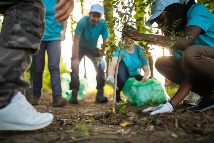 People Planting Tree In Park