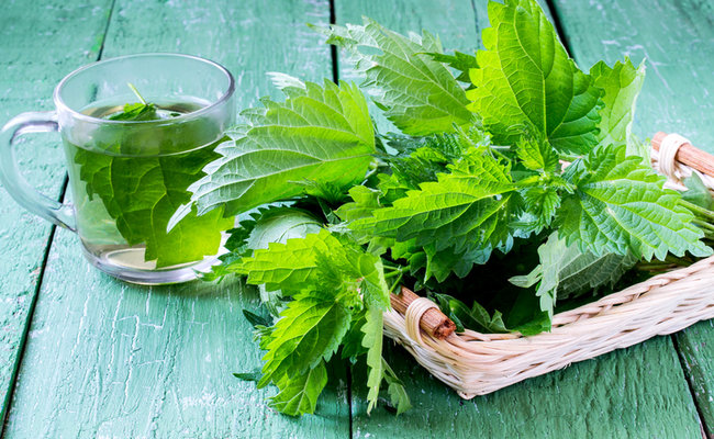 Nettles are nutritional powerhouses that are delicious additions to your diet.