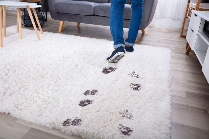 Person Walking With Muddy Footprint On Carpet