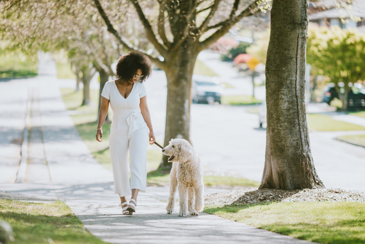 A Young Woman Taking Pet Poodle Dog For Walk