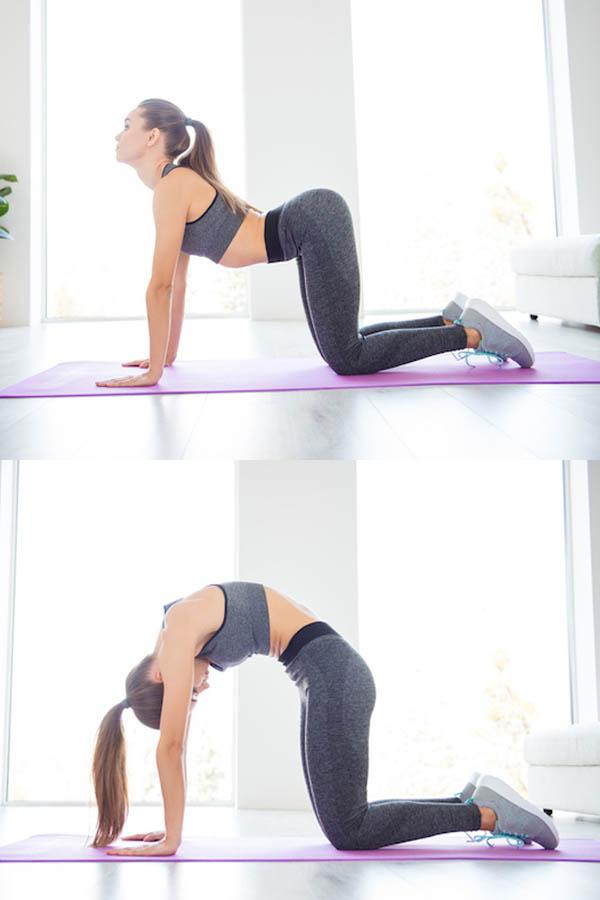 practicing cat/cow pose in a yoga studio
