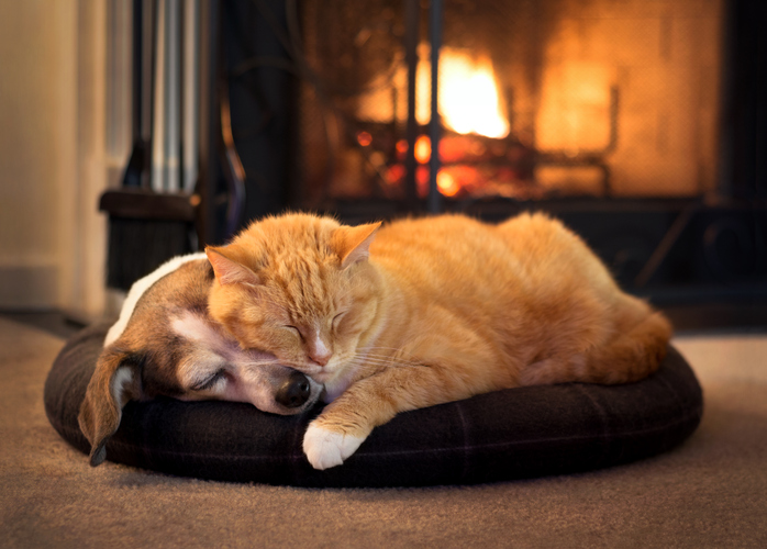 cat and dog sleeping by a fireplace