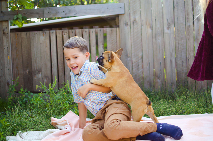 small dog jumping on little boy