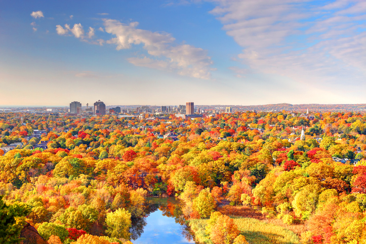 aerial view of autumn trees in New Haven, Connecticut