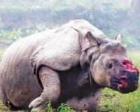 Poaching Should be Stopped!