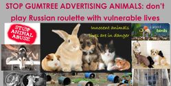 Stop advertising animals Gumtree.