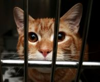 Tell University of Virginia to Stop Using Cats