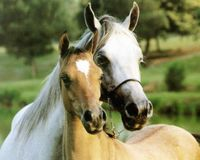 Stop the inhumane slaughter of Horses!