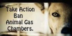 Thank Texas for Banning Gas Chamber Euthansia for Shelter Animals
