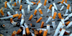 Urge tobacco companies to end smoking tests on animals