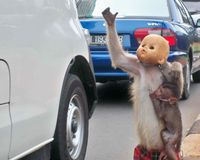 Stop the Torture of Macaque Monkeys in Jakarta