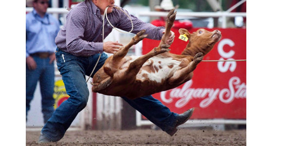 Stop calf-roping at The Calgary Stampede