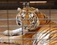 Free Tony the Truck Stop Tiger Now, Not Later