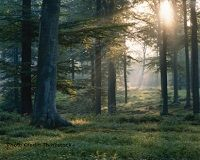 Latvia, Stop Destroying Your Forests