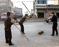 STOP ANIMAL CRUELTY IN GREECE