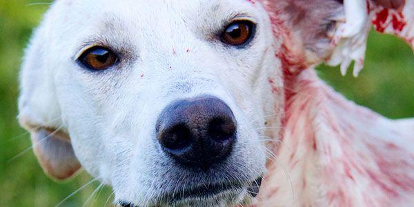 ARRÊT horrible bestialité EN AFRIQUE DU SUD