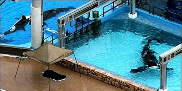 STOP THE IMPRISONMENT OF WHALES LIKE TILIKUM