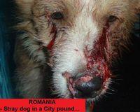 Firma la petizione per dire NO all'eccidio dei randagi rumeni