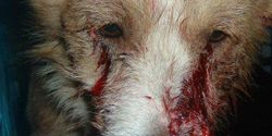 1,000,000 Signatures to Stop Massacre of 1,000,000 Dogs in Romania
