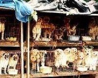 Limit breeding in Pennsylvania Puppy Mills!