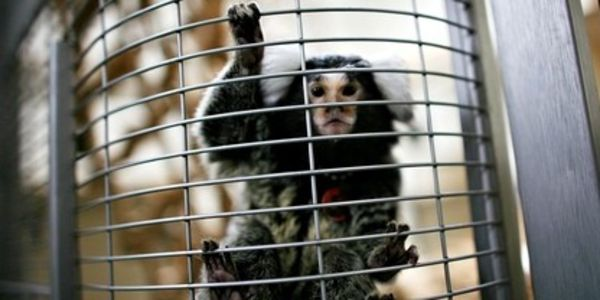 Stop UK from Using Animals in Research!